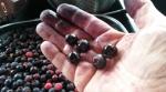 Nice Plump Berries